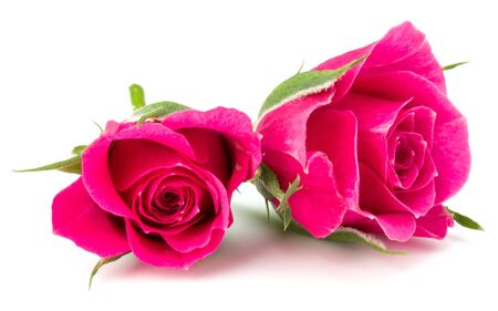 pink rose flower head isolated on white background cutout Zdjęcie Seryjne