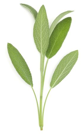 Sage herb leaves bouquet isolated on white background cutout. Top view. Stockfoto