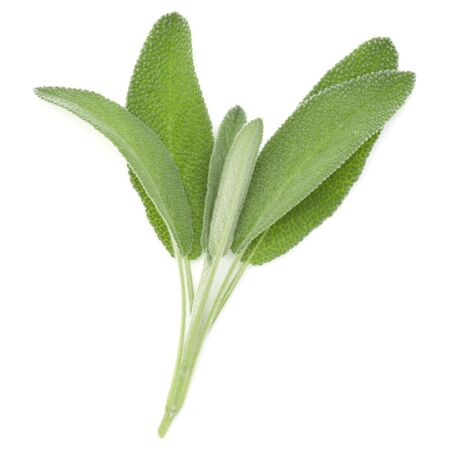 Sage leaves isolated on white background cutout. Stockfoto
