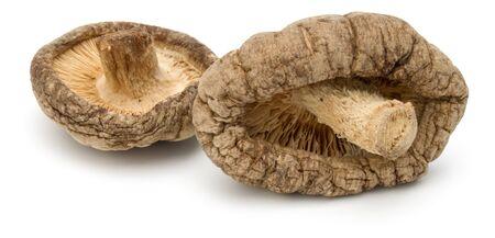 Dried Shiitake Mushroom isolated on white background