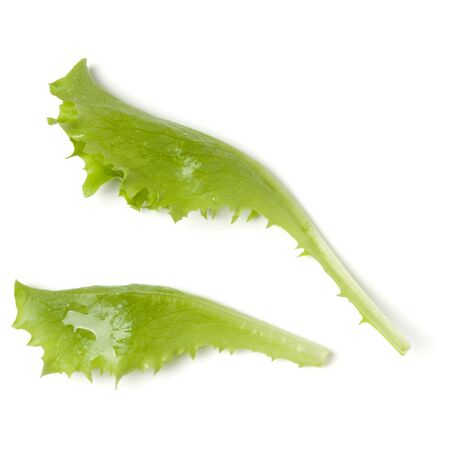 Lettuce  leaf salad isolated on white background. Top view, flat lay.