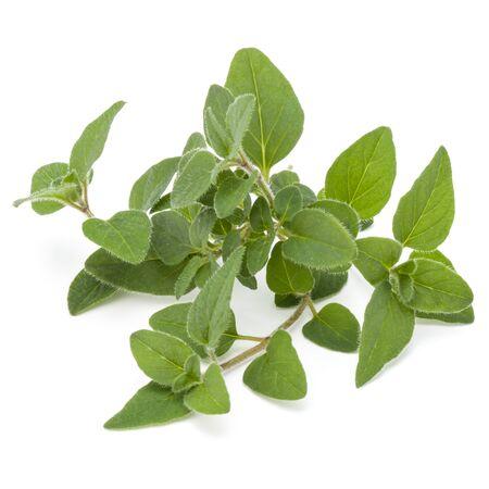 Oregano or marjoram leaves isolated on white background cutout