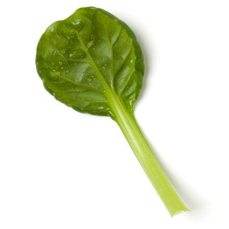Spinach  leaf isolated over white background. Top view, flat lay..