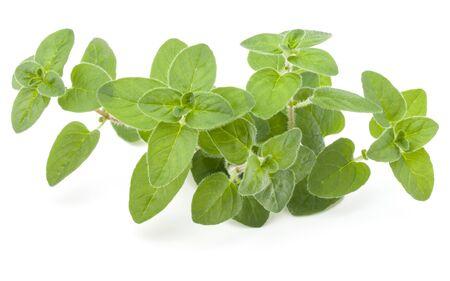 Oregano or marjoram leaves isolated on white