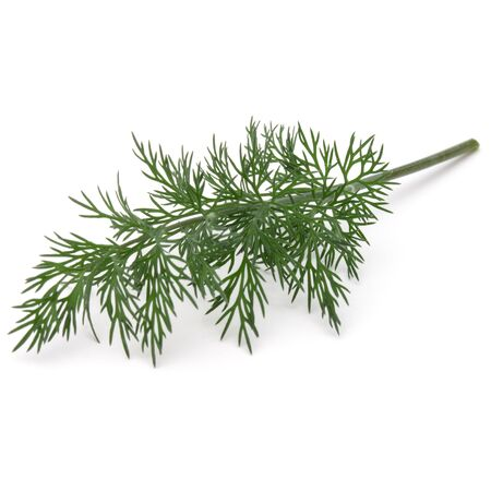 Close up shot of branch of fresh green dill herb leaves isolated on white background Stock Photo - 132913141