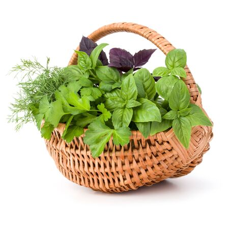 Fresh spices and herbs in wicker basket isolated on white background cutout. Sweet basil, red basil leaves, dill and parsley. Banco de Imagens