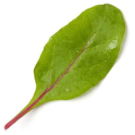 Lettuce chard leaf salad handful isolated on white