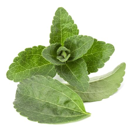 Stevia leaves pieces isolated om white background cut out. 스톡 콘텐츠
