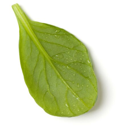 Spinach  leaf isolated on white background. Top view, flat lay. Stock Photo