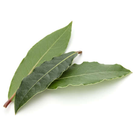 Aromatic bay leaves isolated on white background cutout Standard-Bild