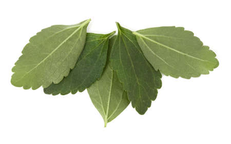 Stevia leaves pieces isolated om white background cut out. Standard-Bild