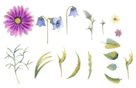 Wildflowers in watercolor 写真素材