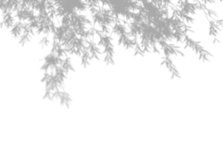 Summer background of shadows tree on a white wall. White and Black for overlaying a photo or mockup