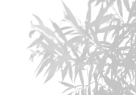 The shadow of an exotic plant on a white wall. Black and white image for photo overlay or the mockup Stok Fotoğraf