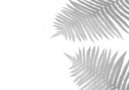 The shadow of tropical leaves on the white wall. Black and white image to overlay the photos or the mockup.