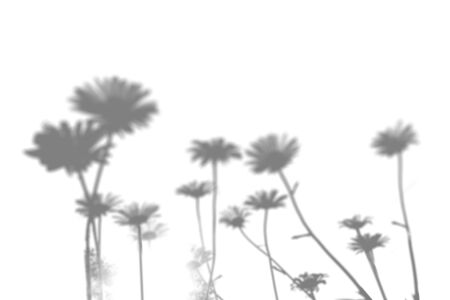 The shadow of the field grass on the white wall. Black and white image for photo overlay or mockup. Stok Fotoğraf