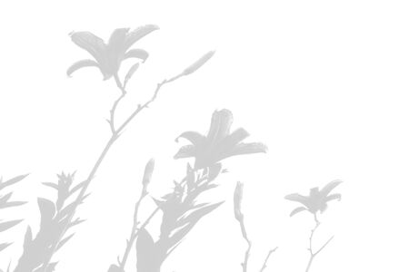 The shadow of the plant on the white wall. Black and white summer background for photo overlay or mockup.