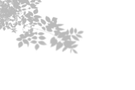 Summer background of shadows tree on a white wall. White and Black for overlaying a photo or mockup.