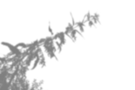 The shadow of the plant on the white wall. Black and white summer background for photo overlay or mockup