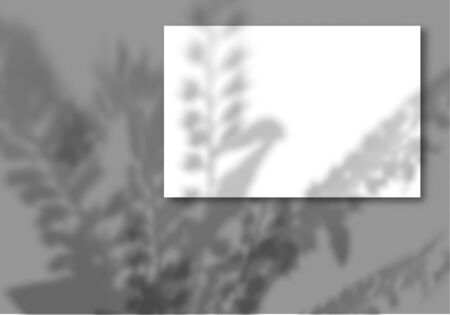 A sheet of white paper on a gray background. Mockup with overlay of plant shadows . Natural light casts the shadow of field plants and flowers from above.