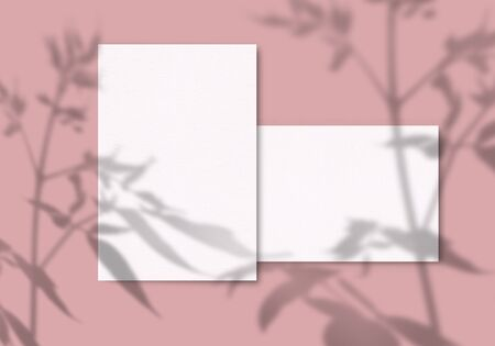 A sheet of white paper on a pink background. Mockup with overlay of plant shadows . Natural light casts the shadow of field plants and flowers from above