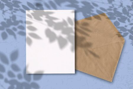 An envelope with a sheet of white paper on a blue background. Mockup with overlay of plant shadows . Natural light casts the shadow of field plants and flowers from above.