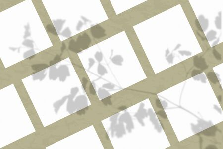 Many square sheets of white textured paper against a olive wall. The mockup is overlaid with plant shadows. Natural light casts shadows from the tops of field plants and flowers. Flat lay, top view