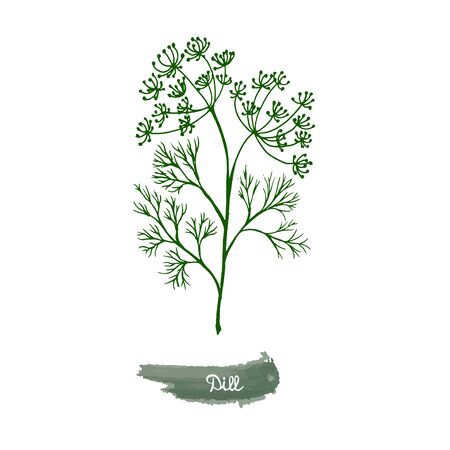 Spicy herbs are grown in the garden. Dill. Vector illustration is drawn by hand. Doodle style. Color image on a white isolated background. Vector illustration