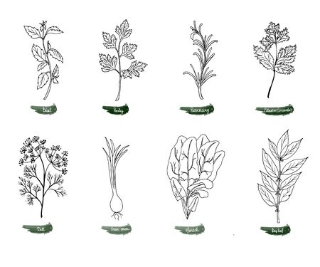 A set of delicious spicy herbs for food. Vector illustration is drawn by hand. Doodle style. Black and white image on a white isolated background. Vector illustration