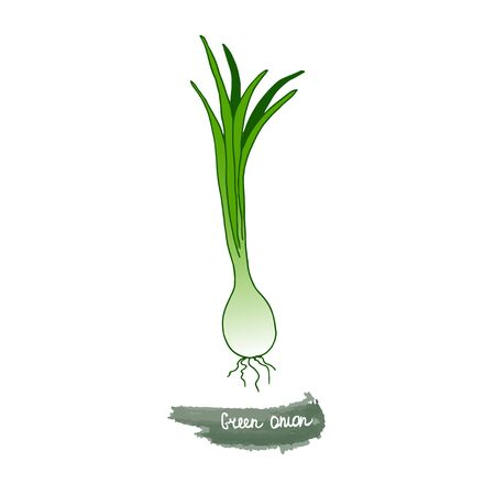 Spicy herbs are grown in the garden. Onion. Vector illustration is drawn by hand. Doodle style. Color image on a white isolated background. Vector illustration