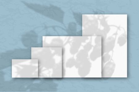 Several horizontal and vertical sheets of white textured paper against a blue wall. Mockup overlay with the plant shadows. Natural light casts shadows from the tops of field plants and flowers.