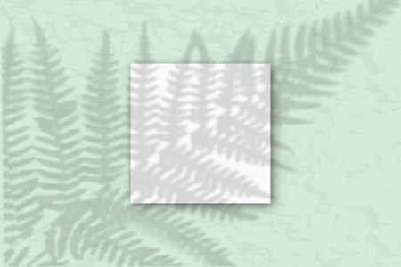 1 square sheet of white textured paper against a gray-green wall. Mockup with an overlay of plant shadows. Natural light casts shadows from the fern leaves. Flat lay, top view.