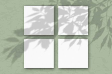 4 square sheets of white textured paper against a green wall. Mockup overlay with the plant shadows. Natural light casts shadows from the tree's foliage. Flat lay, top view.