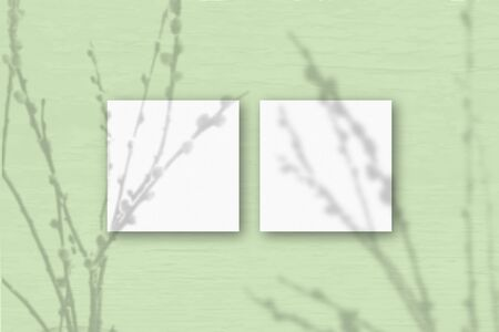 2 square sheets of white textured paper on the light green wall background. Mockup overlay with the plant shadows. Natural light casts shadows from willow branches. Flat lay, top view.