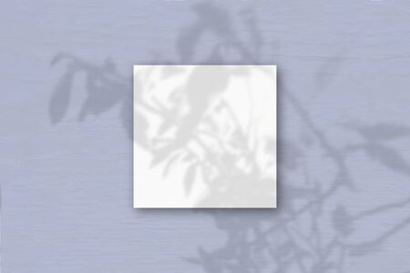 The square sheets of white textured paper on blue wall background. Mockup overlay with the plant shadows. Natural light casts shadows from an exotic plant. Flat lay, top view. Horizontal orientation