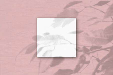 The square sheet of white textured paper on the pink wall background. Mockup overlay with the plant shadows. Natural light casts shadows from an exotic plant.Flat lay, top view.Horizontal orientation