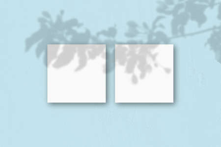 2 square sheets of white textured paper on the blue wall background. Mockup overlay with the plant shadows. Natural light casts shadows from an exotic plant.Flat lay, top view. Horizontal orientation