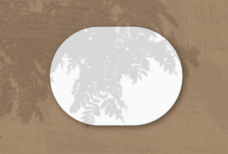 A horizontal oval sheet of white textured paper on the Brown wall background. Mockup overlay with the plant shadows. Natural light casts shadows from an Rowan branch. Flat lay, top view. Horizontal 版權商用圖片
