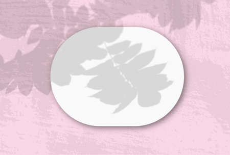 A horizontal oval sheet of white textured paper on the pink wall background. Mockup overlay with the plant shadows. Natural light casts shadows from an exotic plant. Flat lay, top view. Horizontal 版權商用圖片