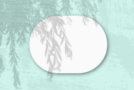 A horizontal oval sheet of white textured paper on the green wall background. Mockup overlay with the plant shadows. Natural light casts shadows from an willow branch. Flat lay, top view. Horizontal