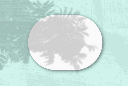 A horizontal oval sheet of white textured paper on the green wall background. Mockup overlay with the plant shadows. Natural light casts shadows from an Rowan branch. Flat lay, top view. Vertical
