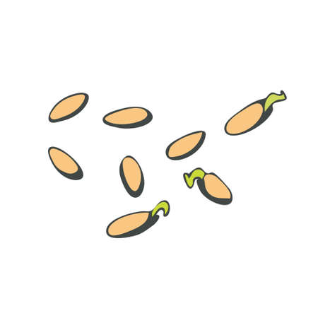 Cucumber seeds, closed and sprouted in a doodle style on a white background. Vector illustration.