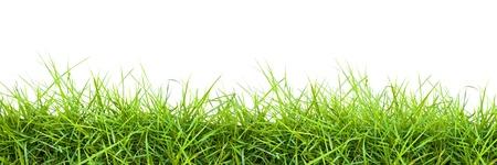 bordi: Extra grande striscia orizzontale di erba su sfondo bianco.