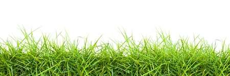 Extra large horizontal strip of grass on white background. photo