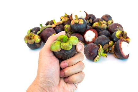 sabbatical: Mangosteen in hand isolated on whith background