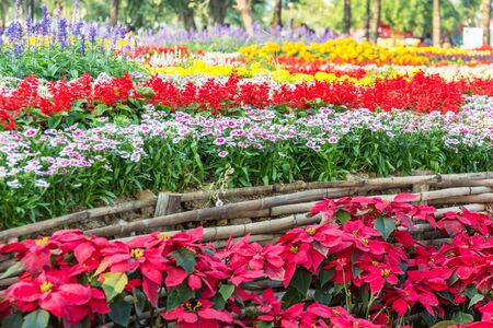 Flower garden on evening time at khonkaen,thailand photo