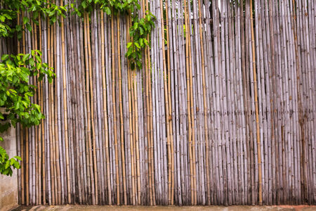 bamboo fence at natural resouce  Stock Photo