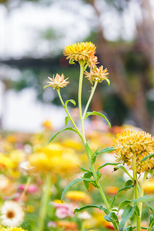 pubic: various flower on garden pubic,out door