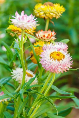 various flower on garden pubic,out door photo