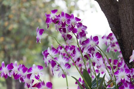 orchid house: Fresh orchid flower on natural outdoor view